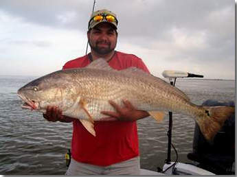 Fishing Guide Captain John Frankson Fishing Service ,Trophy Red Fish